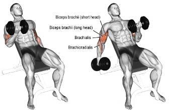 mejores ejercicios de brazo 02