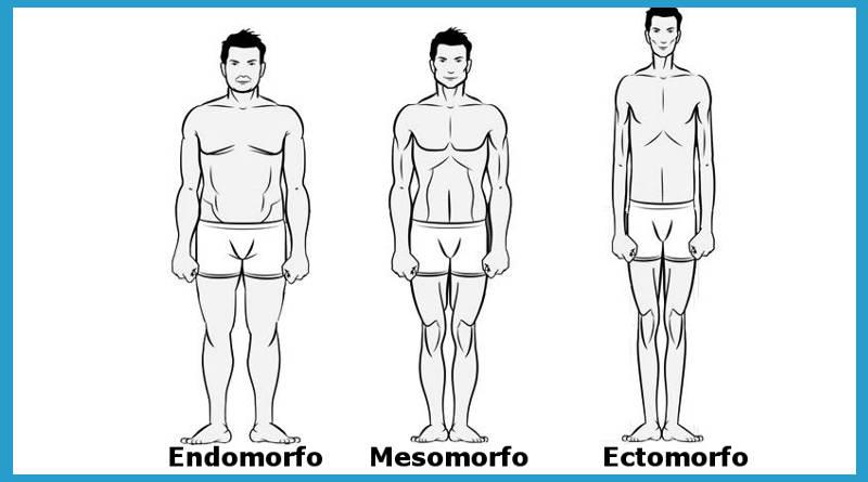 entrenamiento ectomorfo