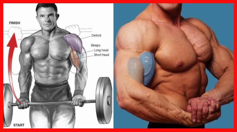 mejores ejercicios de brazo