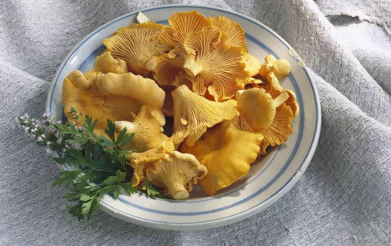 Setas Chanterelle Vitamina D